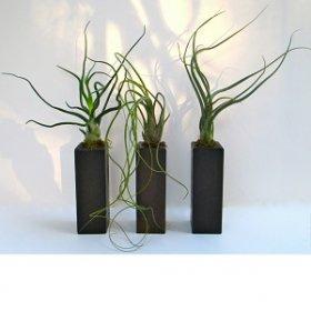 Это Спарта: 5 комнатных растений, которые выживут и без воды